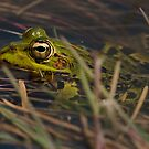 Green Frog by Csar Torres
