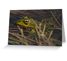 Green Frog Greeting Card