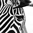 Stripes  by Darren Bailey LRPS