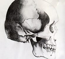 Human Skull - Profile by Lara Rose Creative