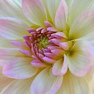 Sensual Dahlia. by Lee d'Entremont