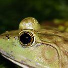 Froggy! by vasu