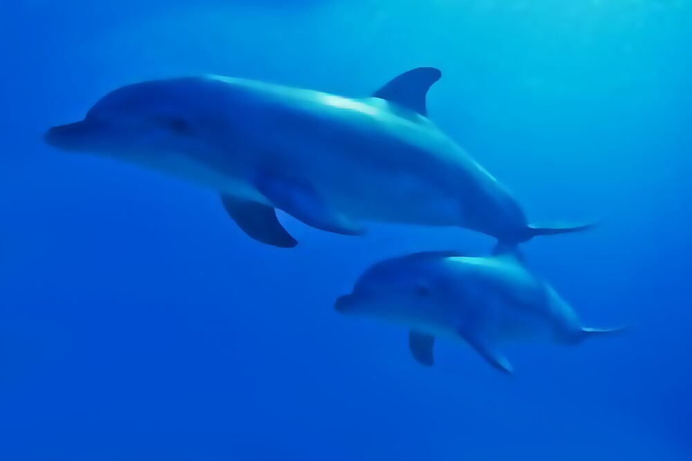 Common bottle nose dolphin (Tursiops truncatus) by Terry Bailey