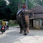 Traffic In Nepal by KerryPurnell