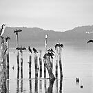 Cormorants by pennyswork