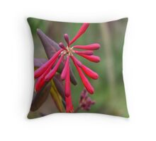 Trumpet Honeysuckle - Buds of Coral Woodbine Throw Pillow