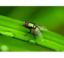Beauty Flies Photographic Print