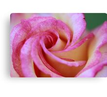 Colorful Rose Canvas Print