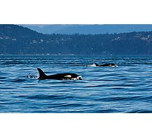 2 Killer Whales Photographic Print