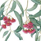Eucalyptus leucoxylon - Yellow Box with Red Flowers by Cheryl Hodges