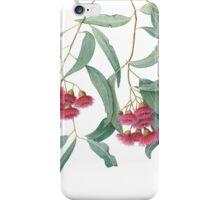 Eucalyptus leucoxylon - Yellow Box with Red Flowers iPhone Case/Skin