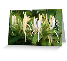 Closeup shot of Lonicera European Honeysuckle Flower Greeting Card