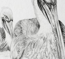 Brown Pelican Pair Sticker