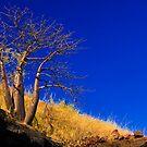 Kimberley, Western Australia by Amber  Williams