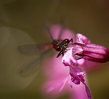 Pretty in Pink by Sarah Walters