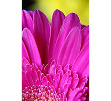 Pink bloom Photographic Print