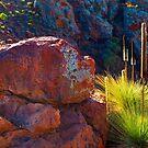 Flinders Ranges, South Australia by Amber  Williams