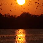 Tring Reservoir Sunset by Dale Rockell