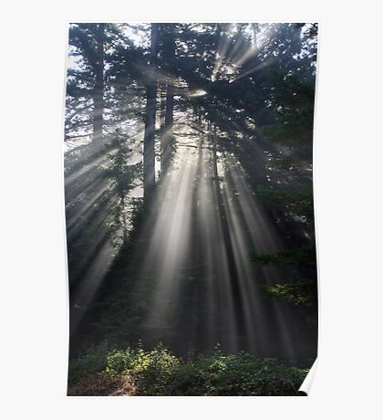 Sun Rays Crossing a Misty Coastal Forest Poster