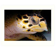 Hawks Bill Sea Turtle Art Print