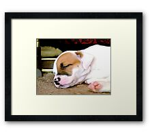 Marlie sleeping Framed Print