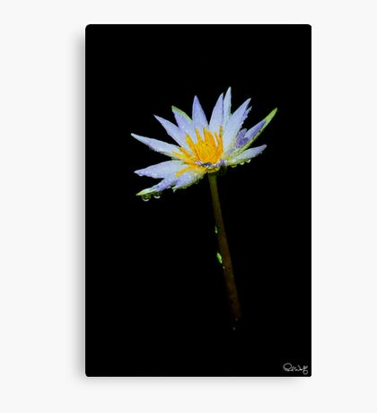 American Lotus After Shower-Oil Painting Canvas Print