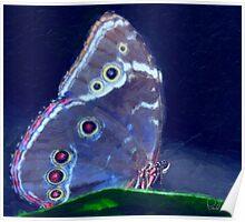 Blue Morpho-Oil Painting Effect Poster