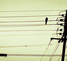 Feet on Wire! by bibinkumar