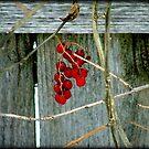 Berries © by Dawn M. Becker