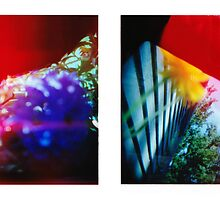 Obscured - 120 Color Holga Diptych  by Emily Jones-Blachowicz