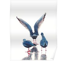 Blue birds II Poster