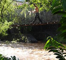 Jungle Bridge - Puente De La Selva by Bernhard Matejka