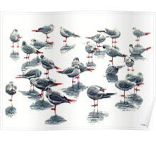 Black birds V Poster