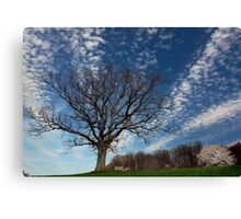 Cold Fingers Canvas Print