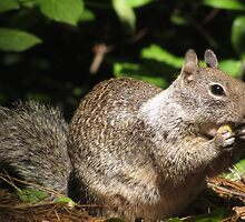 Cute Squirrel Photo and Cell Phone Case by deanworld
