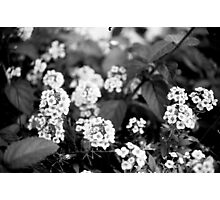 Little Flowers - Black and White Print Photographic Print