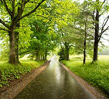 Wet Black Road with Trees by Mike Koenig