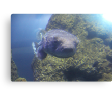 """Puffer Fish""  by Carter L. Shepard Canvas Print"