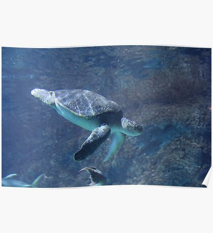 """""""Sea Turtle""""  by Carter L. Shepard Poster"""