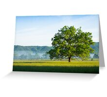 Mighty Oak Tree - Cades Cove, Smoky Mountains National Park Greeting Card