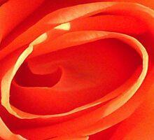 Rose on Fire Sticker