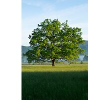 Mighty Oak Tree - Cades Cove, Smoky Mountains National Park Photographic Print