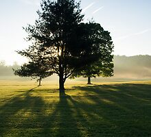 Sun Rise Through the Trees, Cades Cove, Smoky Mountain National Park by Mike Koenig