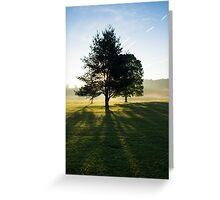 Sun Rise Through the Trees, Cades Cove, Smoky Mountain National Park Greeting Card