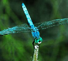 Dragonfly by George Lenz