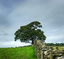 The Finsthwaite Tree by Jamie  Green