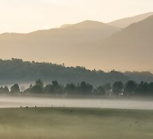 Mountain Sunrise Fog, Cades Cove, Smoky Mountain National Park by Mike Koenig