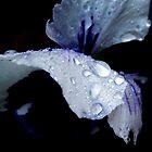 Dew - Macro Flower Print by Emily Jones-Blachowicz