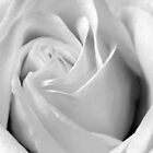 Singularity - Black and White Macro Print by Emily Jones-Blachowicz