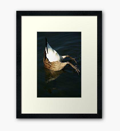 Invert-A-Bird Framed Print